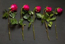 Five Scarlet Red Purple Beauti...