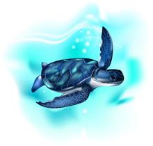Turtle In The Ocean. Sea Turtl...