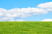 Field With Grass And Flowers O...