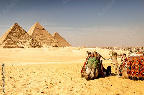 Canvastavla Camelos observando as pirâmides de Giza