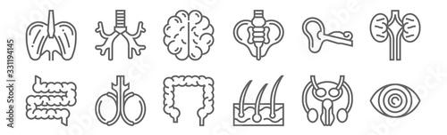 Vászonkép set of 12 human organs icons