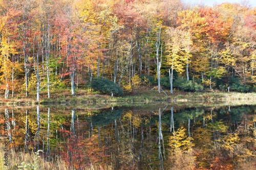 Beautiful reflection of autumn trees on Mirror Lake in Canaan Valley, Tucker Cou Tapéta, Fotótapéta
