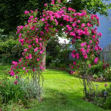 A Beautiful Rose Arbour As An ...