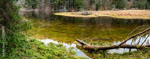 Fotografia Rive sauvage et tourbière flottante de l'étang du Devin, Le Bonhomme, Lapoutroie