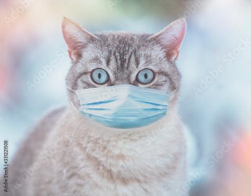 Fototapeta The cat in medical face mask (respirator) outdoors. Medical concept obraz