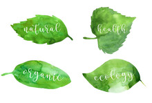 Watercolor Botanical Green Leaves With White Text Isolated On White Background. Botanical Illustration. Green Nature, Ecology, Care. Earth Day. Save The Planet. Lettering Calligraphy