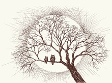 Owls Family In A Tree Over Ful...