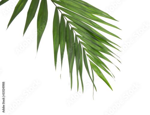 Fresh green tropical leaf isolated on white Wallpaper Mural