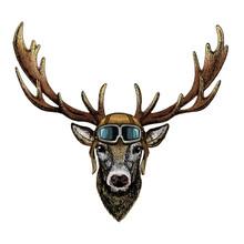 Deer Portrait. Head Of Wild An...
