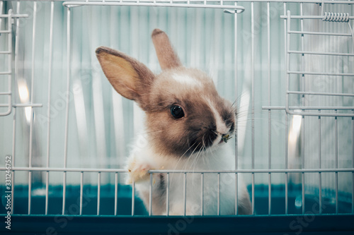 Tela home rabbit in a cage