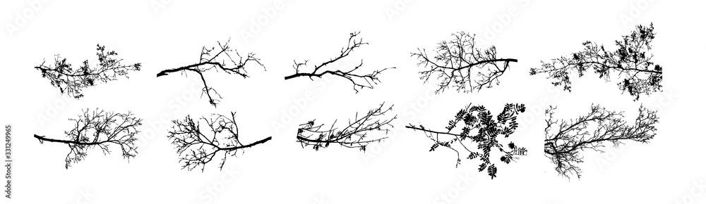 Fototapeta A set of tree sprigs. Vector illustration