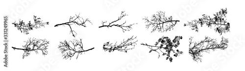 Fotografia A set of tree sprigs. Vector illustration