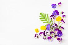 Beautiful Pansy Summer Flowers...