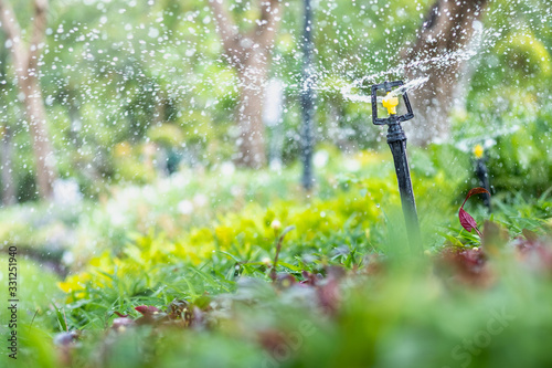 Obraz Amazing nature view of sprinkler on blurred greenery background in garden and sunlight with copy space using as background natural green plants landscape, ecology, fresh wallpaper concept. - fototapety do salonu