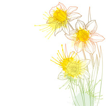 Corner Bouquet With Outline Narcissus Or Daffodil Flower And Leaf In Pastel Yellow And Orange Isolated On White Background.
