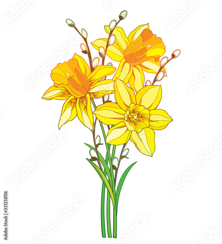 Cuadros en Lienzo Bouquet with outline yellow narcissus or daffodil flower and willow branch isolated on white background