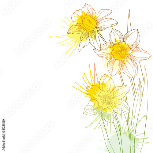 Fotografie, Obraz Corner bouquet with outline narcissus or daffodil flower and leaf in pastel yellow and orange isolated on white background