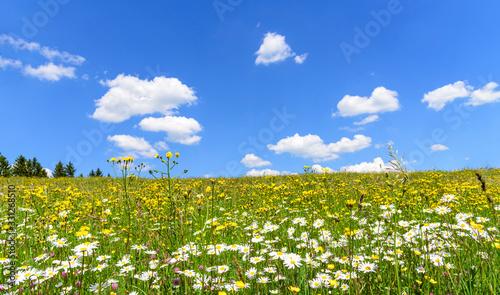 Fototapeta Bunte Frühlingswiese mit weiß-blauem Himmel obraz
