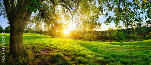 Sunset view from under a tree on a green meadow with hills on the horizon