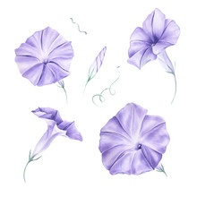 Watercolor Morning Glory Flower Clipart. Blue Lilac Morning Glory Flower. Blue Wedding Floral. Wedding Decor, Invitations, Cards