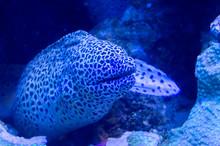 Morena Fish Inside The Aquarium