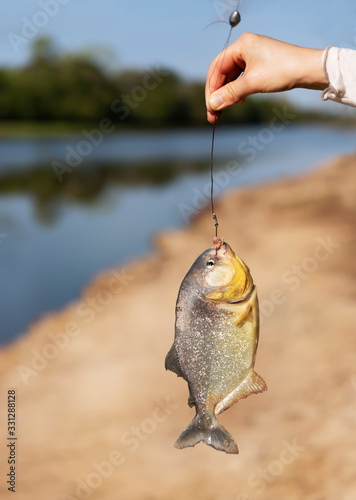 Fototapeta Person holding piranha on fishing line