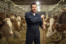 Male Farmer On A Dairy Farm Wi...