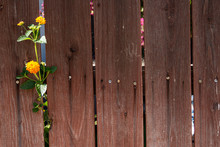 Old Weathered Wood Fence With ...