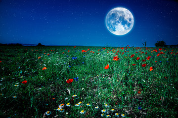 wild flower poppy field meadow at night with moon and stars
