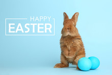 Adorable Fluffy Bunny And Easter Eggs On Light Blue Background