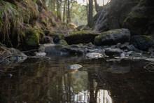 Río Con Rocas En Un Bosque Ve...