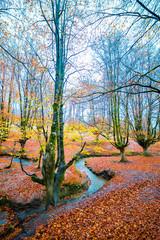 Otzarreta forest in autumn with a stream