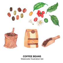 Coffee Beans And Plants Vector Watercolor Illustration Set