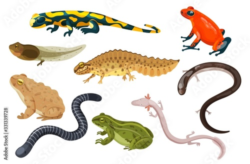 Canvas Print Amphibian vector illustration set