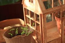 Miniature Wooden Greenhouse, H...