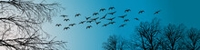 Swans And Trees Crowns On Blue Sky Background