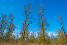 Forest In Wetland With Deciduous Trees Below A Blue Sky In Sunlight In Winter