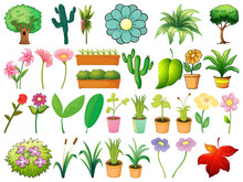 Large Set Of Different Plants On White Background