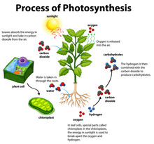 Diagram Showing Process Of Pho...