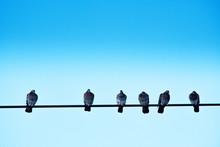 Six Pigeons Perched On An Elec...