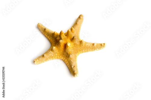 Photo starfish on white