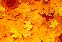 Autumn Leaves Background. Oran...