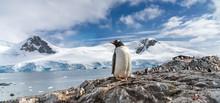 Penguins In Antarctica. Port L...