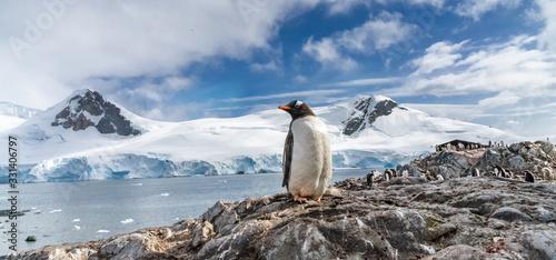 Obraz na plátně Penguins in Antarctica. Port Lockroy.