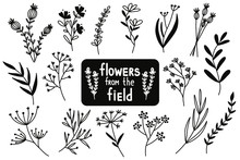 Flowers From The Field. Vector...