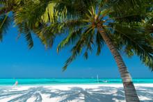 Sandy Beach Of Tropical Island...