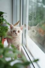 British White Kitten Sits On A...