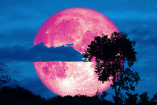 Full Crust Pink Moon And Silhouette Tree In The Field And Night Sky