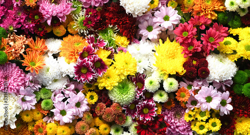 Flowers wall background with amazing red,orange,pink,purple,green and white chrysanthemum flowers ,Wedding decoration, hand made Beautiful flower wall background