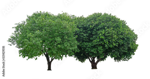 Two trees isolated, a couple of evergreen leaves plant dicut on white background Canvas Print